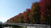 Chicago -Foliage - 紅色的千禧公園:P1080352.JPG