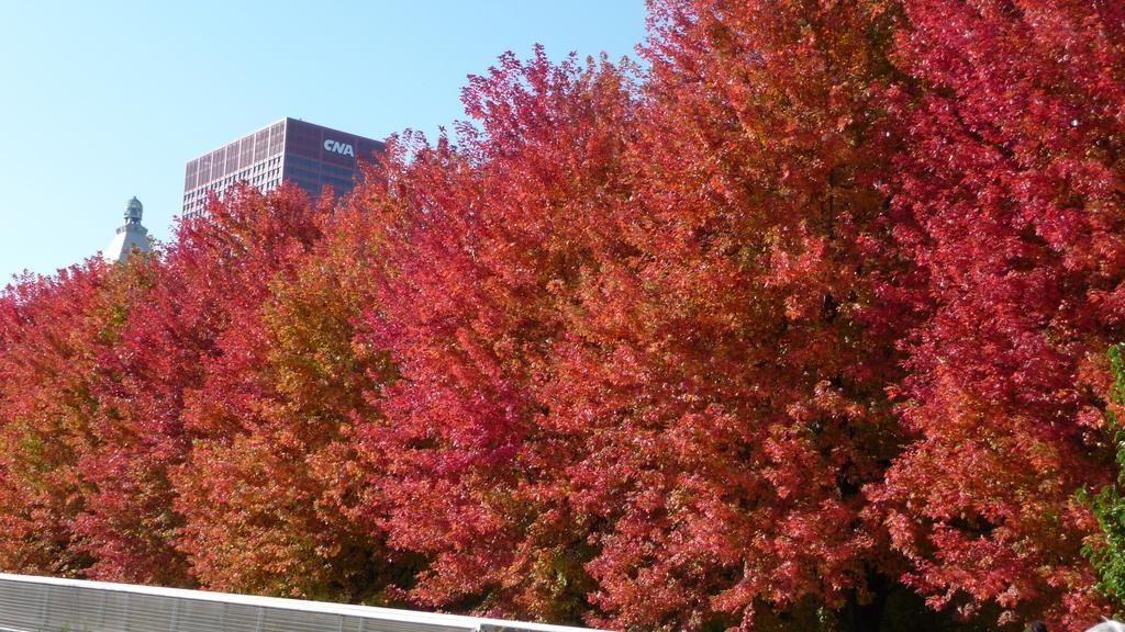 October - Chicago:P1080387.JPG