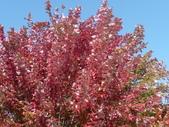 Chicago -Foliage - 紅色的千禧公園:P1080362.JPG