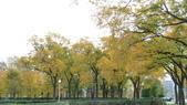 October - Chicago:P1080476.JPG