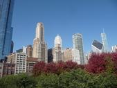Chicago -Foliage - 紅色的千禧公園:P1080365.JPG