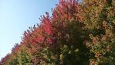 Chicago -Foliage - 紅色的千禧公園:P1080357.JPG