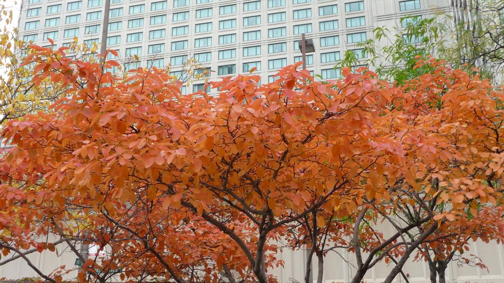 October - Chicago:P1080441.JPG