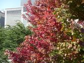 Chicago -Foliage - 紅色的千禧公園:P1080359.JPG