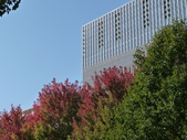 Chicago -Foliage - 紅色的千禧公園:P1080350.JPG