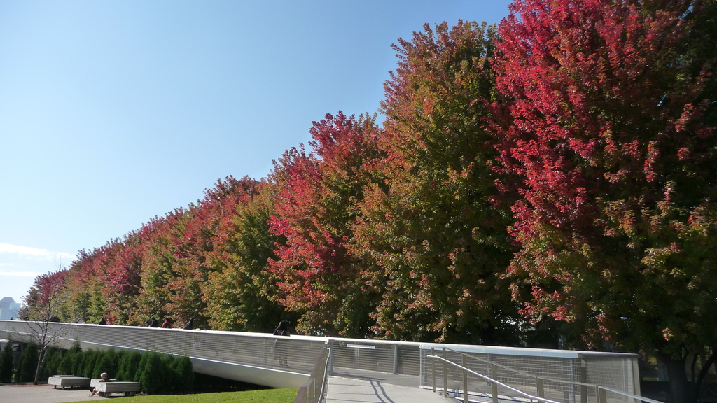 Chicago -Foliage - 紅色的千禧公園:P1080353.JPG