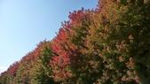 Chicago -Foliage - 紅色的千禧公園:P1080356.JPG