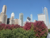 Chicago -Foliage - 紅色的千禧公園:P1080370.JPG