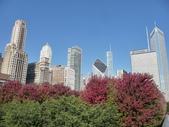 Chicago -Foliage - 紅色的千禧公園:P1080369.JPG