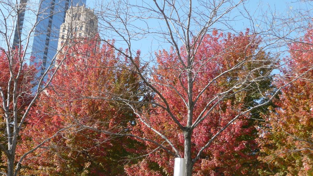 Chicago -Foliage - 紅色的千禧公園:P1080344.JPG