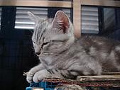 三個月的貓照:ZZZZZ~