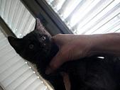 兩個月貓照:黑貓特寫