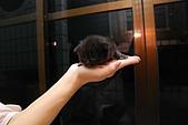 活力小宅貓:[活力新血♂] 黑嚕嚕