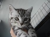 兩個月貓照:美美的小公貓