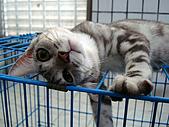 貓照:檸檬