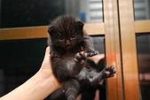 活力小宅貓:[活力新血♀] 煙燻黑喵喵