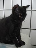 三個月的貓照:小黑難得乖乖的讓我拍