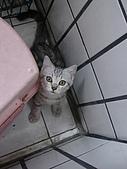 三個月的貓照:俯拍