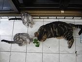 三個月的貓照:咪咪教學時間