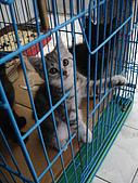 兩個月貓照:水汪汪的祈求~