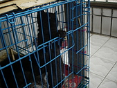 兩個月貓照:什麼時候可以出去玩哩
