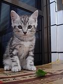 兩個月貓照:跟貓薄荷來個合照