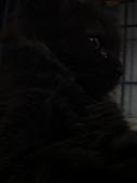 兩個月貓照:黑成一片
