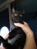 兩個月貓照:黑嚕嚕好呆的表情