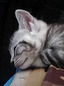 兩個月貓照:ZZZZZ~
