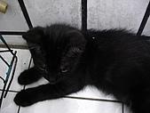 三個月的貓照:黑嚕嚕 烏抹抹
