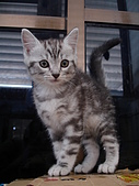 兩個月貓照:乖乖的站著