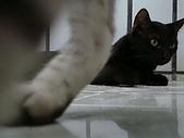 貓照:嚕嚕