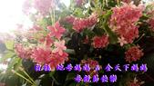公告與海報類:106-05-14母親節快樂.png