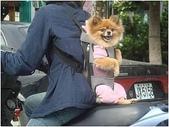 徵文相片:狗狗背包.jpg