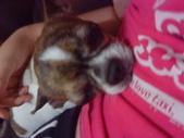▇▃_DOG_▃▇:1750029187.jpg