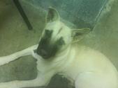 ▇▃_DOG_▃▇:1750029176.jpg