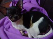 ▇▃_DOG_▃▇:1750029190.jpg