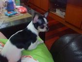 ▇▃_DOG_▃▇:1750029192.jpg