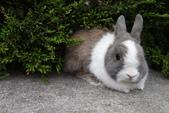16199776兔子波波日式寫真:CRW_5247.JPG