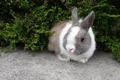 16199776兔子波波日式寫真:CRW_5248.JPG