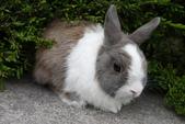16199776兔子波波日式寫真:CRW_5250.JPG