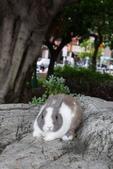 16199776兔子波波日式寫真:CRW_5257.JPG