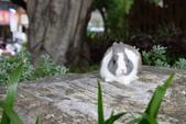 16199776兔子波波日式寫真:CRW_5259.JPG