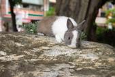 16199776兔子波波日式寫真:CRW_5261.JPG