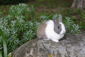 16199776兔子波波日式寫真:CRW_5263.JPG