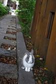 16199776兔子波波日式寫真:CRW_5267.JPG