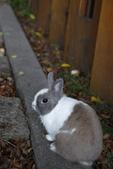 16199776兔子波波日式寫真:CRW_5273.JPG