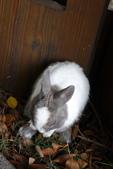 16199776兔子波波日式寫真:CRW_5276.JPG