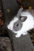 16199776兔子波波日式寫真:CRW_5277.JPG