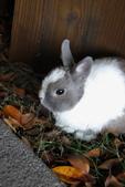 16199776兔子波波日式寫真:CRW_5279.JPG